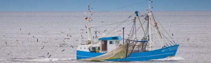 Kabeljauwvissen-1170x350